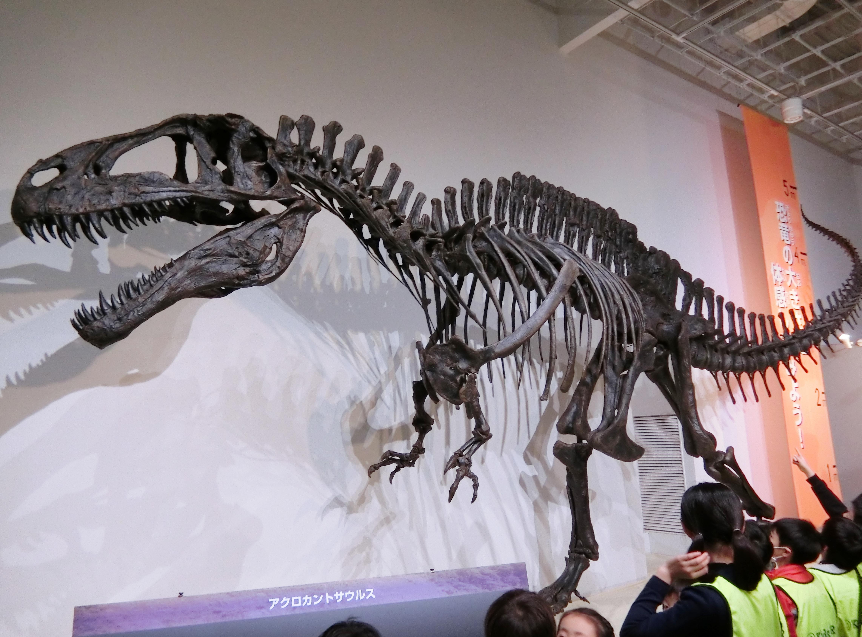 アクロカントサウルス.JPG